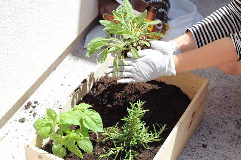 wine crate herb finish planting